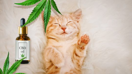 CBD Products for Our Pets