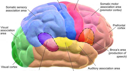 choline improves cognitive functions